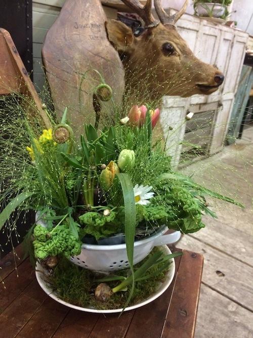 お花の教室(球根*ゼンマイ*菜の花)_f0324766_14383027.jpg