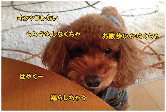 b0111376_16231973.jpg