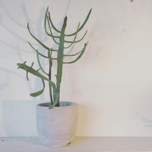 植物_b0209477_15313694.jpg