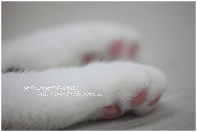 f0361079_16145280.jpg