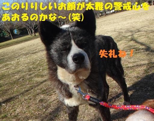 f0121712_07573895.jpg