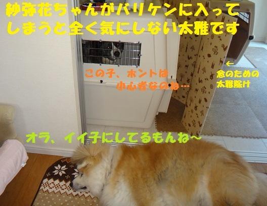 f0121712_08433459.jpg