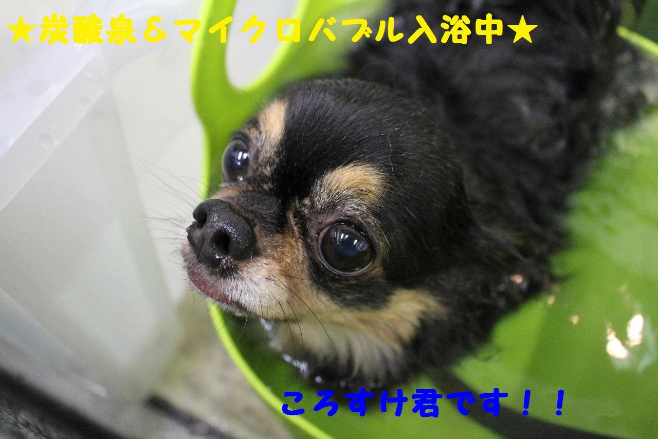 b0130018_1021597.jpg