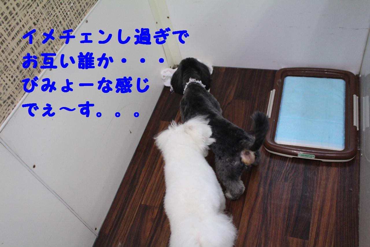 b0130018_18542012.jpg