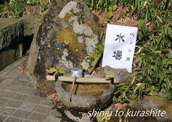 犬連れ伊豆旅行Vol.18(おまけ)_a0246523_17561795.jpg