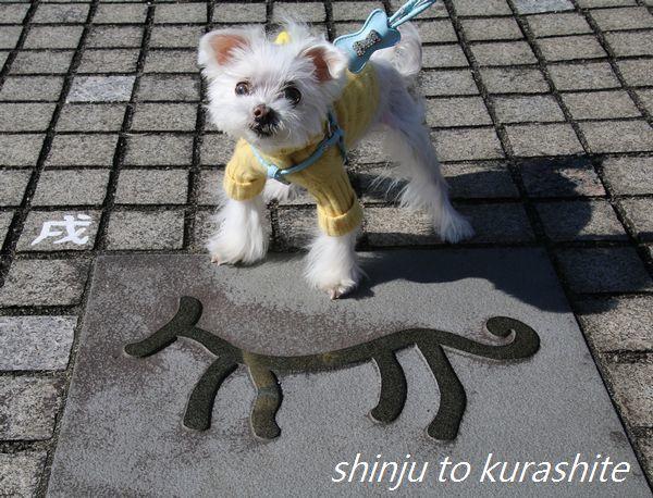 犬連れ伊豆旅行Vol.18(おまけ)_a0246523_17573018.jpg