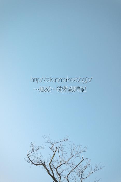 f0235723_20325530.jpg