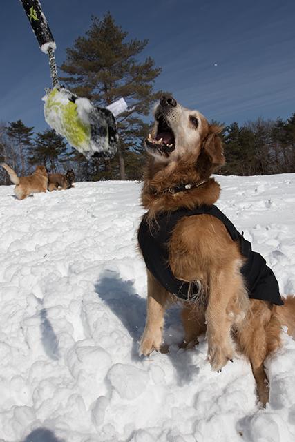 2年振りの雪遊び その2_e0192921_22321588.jpg