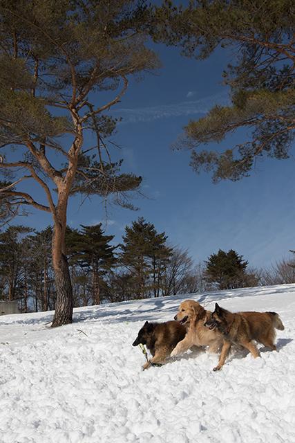 2年振りの雪遊び その2_e0192921_22322486.jpg
