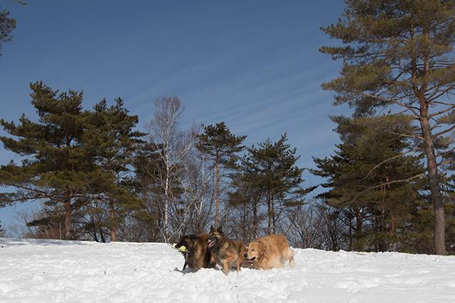 2年振りの雪遊び その2_e0192921_22322701.jpg