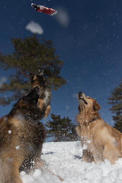 2年振りの雪遊び その2_e0192921_22323381.jpg