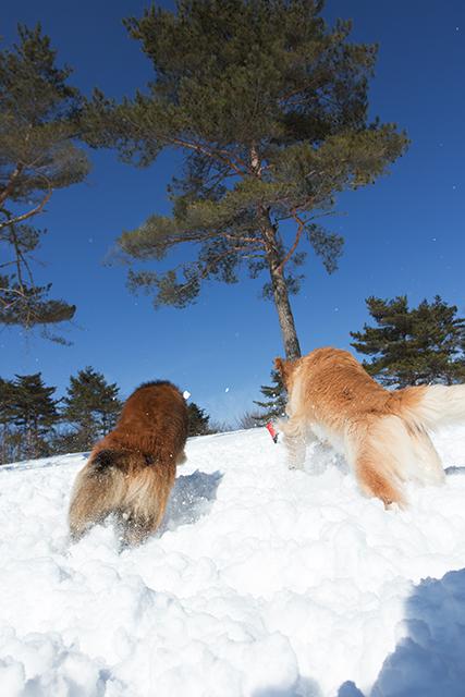 2年振りの雪遊び その2_e0192921_22324428.jpg