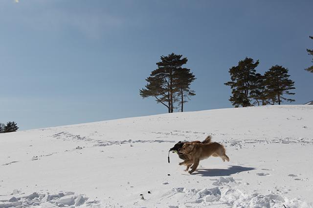 2年振りの雪遊び その2_e0192921_22324700.jpg