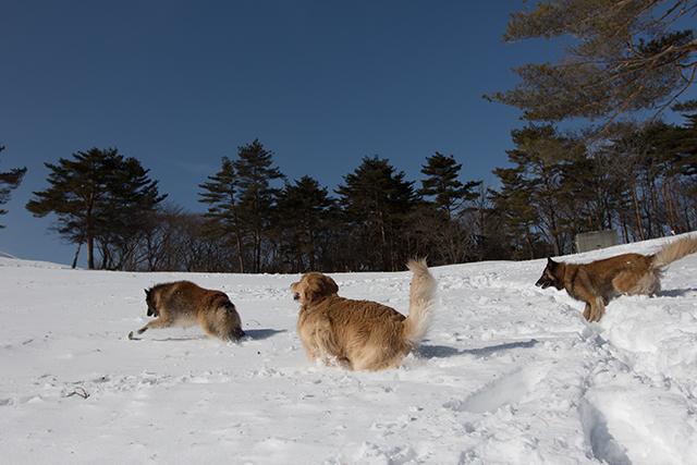 2年振りの雪遊び その2_e0192921_22325175.jpg