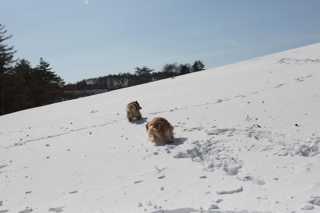 2年振りの雪遊び その2_e0192921_22325960.jpg