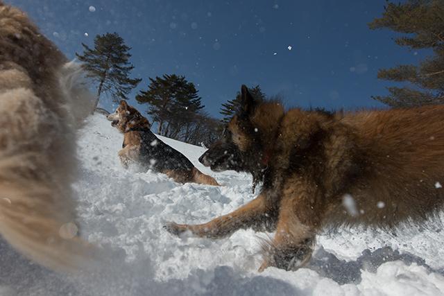 2年振りの雪遊び その2_e0192921_22325970.jpg