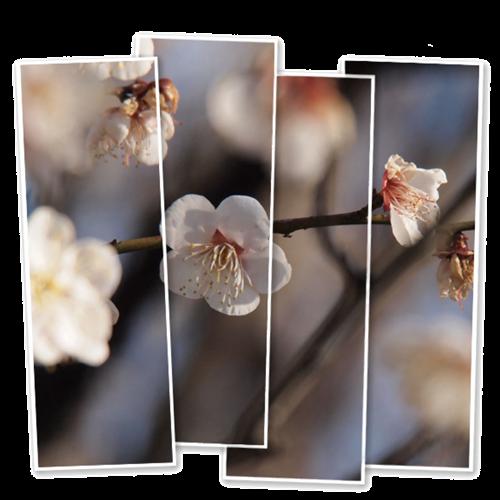 春の陽気に誘われて_c0026824_12334189.png