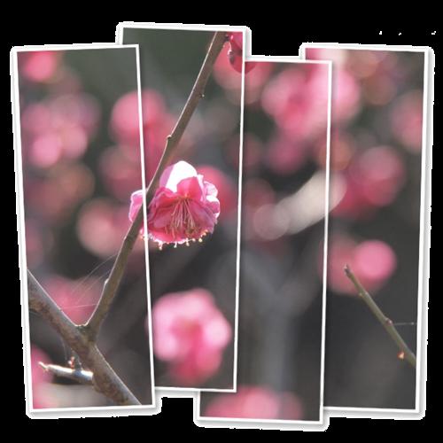 春の陽気に誘われて_c0026824_1233967.png