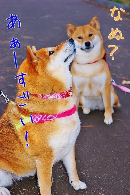 甘え上手_b0314043_10111740.jpg