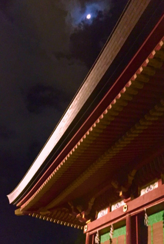 鎌倉心景「めじろ」_a0135581_22212929.jpg