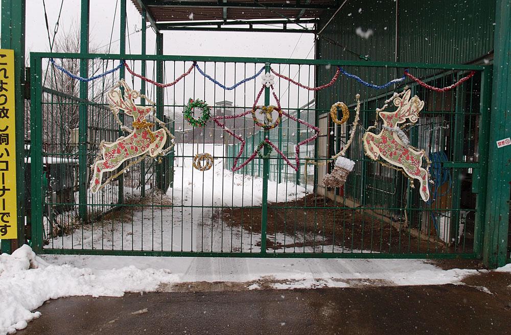 2016.12.17 東北サファリパーク☆クリスマススペシャルサファリカー_f0250322_22293943.jpg