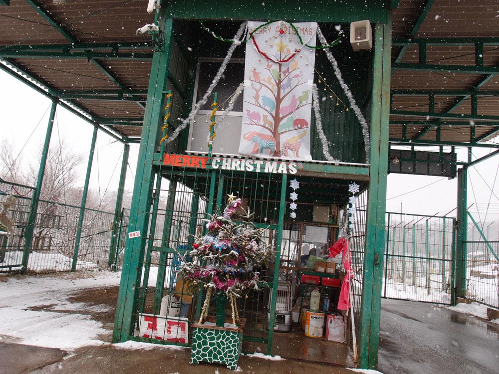 2016.12.17 東北サファリパーク☆クリスマススペシャルサファリカー_f0250322_22294697.jpg