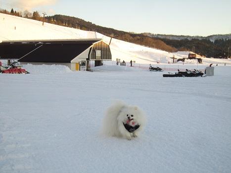 スキー場であそぶ(1)_b0177436_20134385.jpg