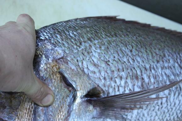 1月の美味しいお魚たち_b0193555_01324545.jpg