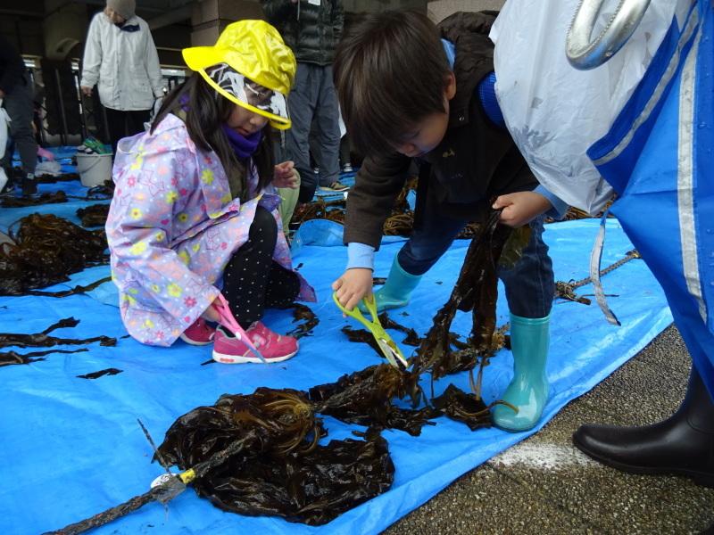 『みんなでワカメを育てよう:収穫祭』・・・せんなん里海公園_c0108460_20501390.jpg