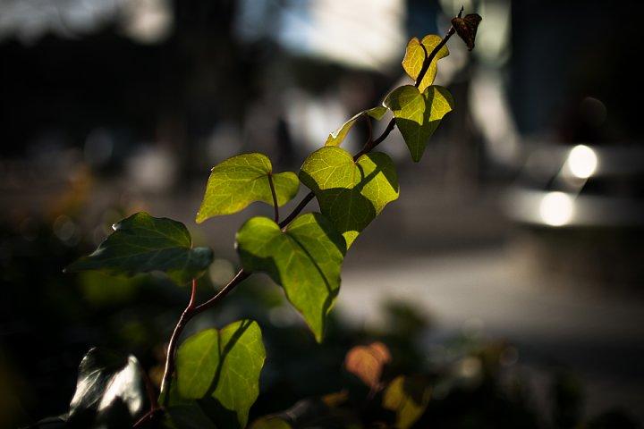夕日を受ける公園_d0353489_2055323.jpg