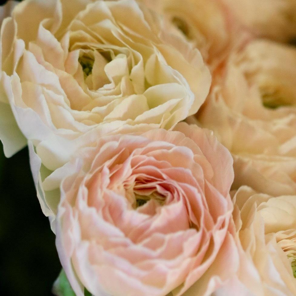 週末には、花屋に行こう!_c0366722_17534129.jpg