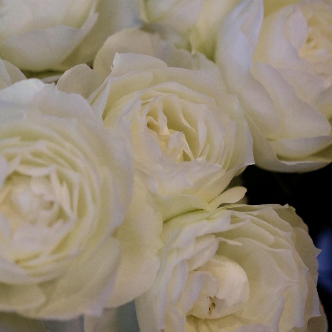 週末には、花屋に行こう!_c0366722_17535162.jpg