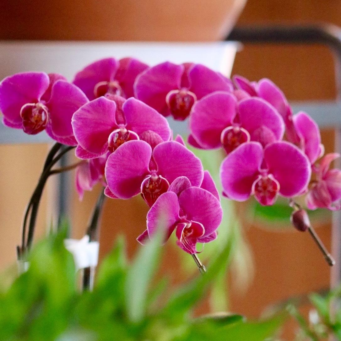 週末には、花屋に行こう!_c0366722_17543087.jpg