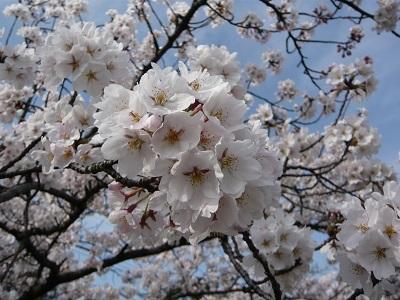 我が家に春が訪れました🌸_c0369433_17363218.jpg