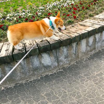 慣らしロング散歩 1_f0035333_22514259.jpg