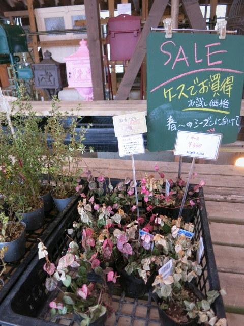 FLOWER FIELD Garden\'s * 感謝セール開催中♪ @追分_f0236260_03085843.jpg