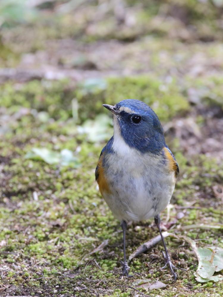 今日の鳥見(2017年2月7日)_f0235311_19305018.jpg