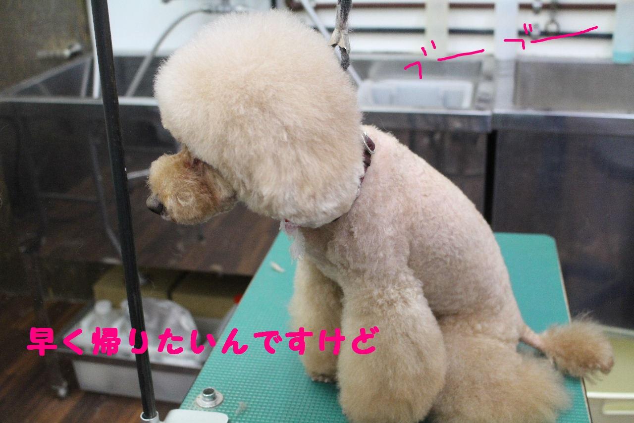 ぎょうざ~!!_b0130018_8255645.jpg
