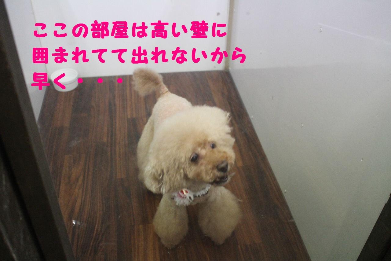 ぎょうざ~!!_b0130018_826618.jpg