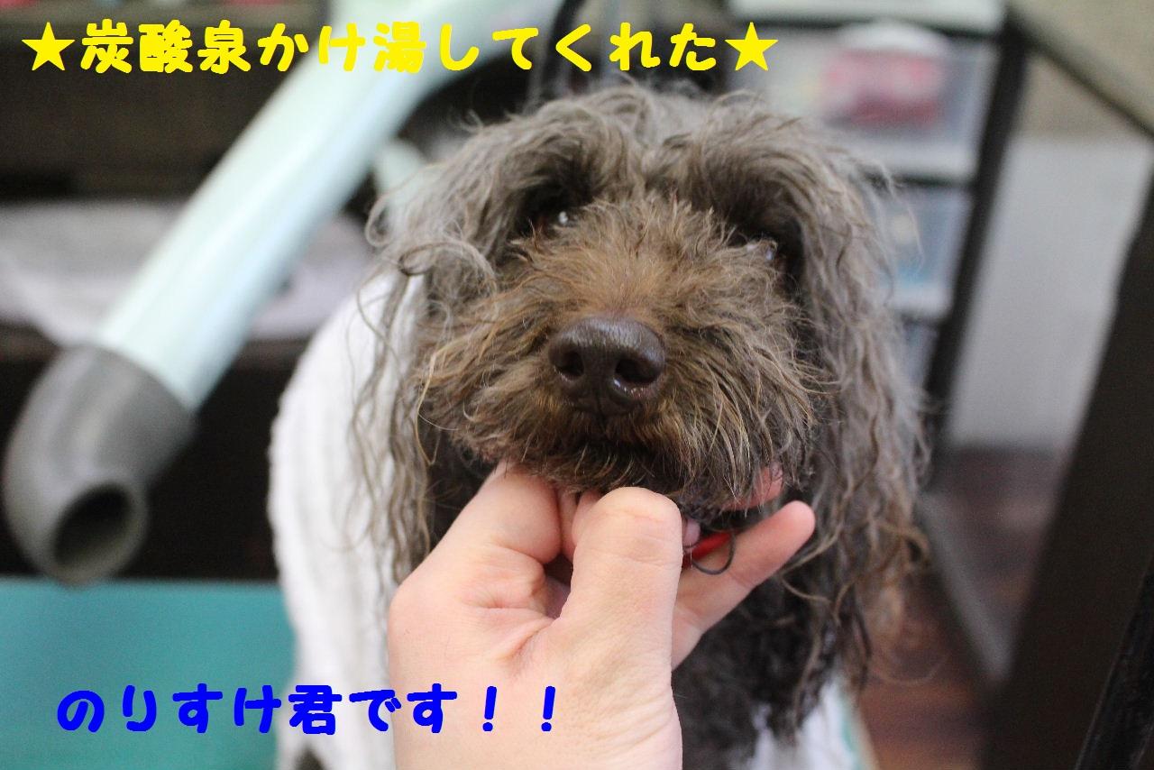 ぎょうざ~!!_b0130018_832332.jpg