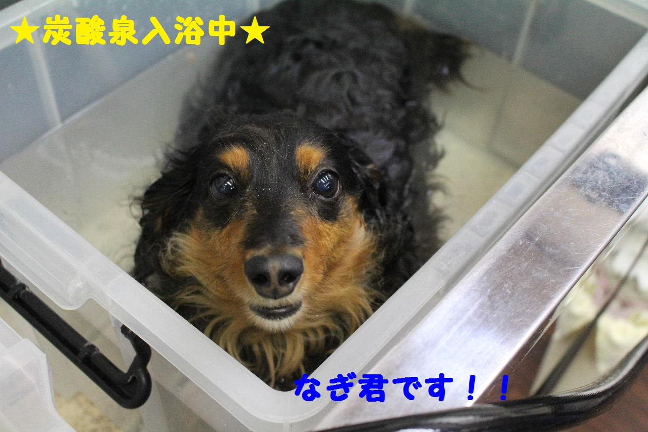 ぎょうざ~!!_b0130018_8323679.jpg