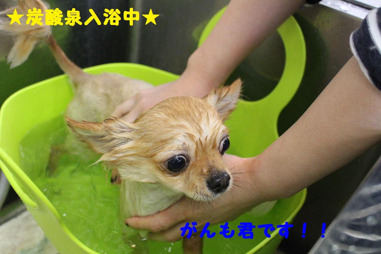 ぎょうざ~!!_b0130018_8391037.jpg