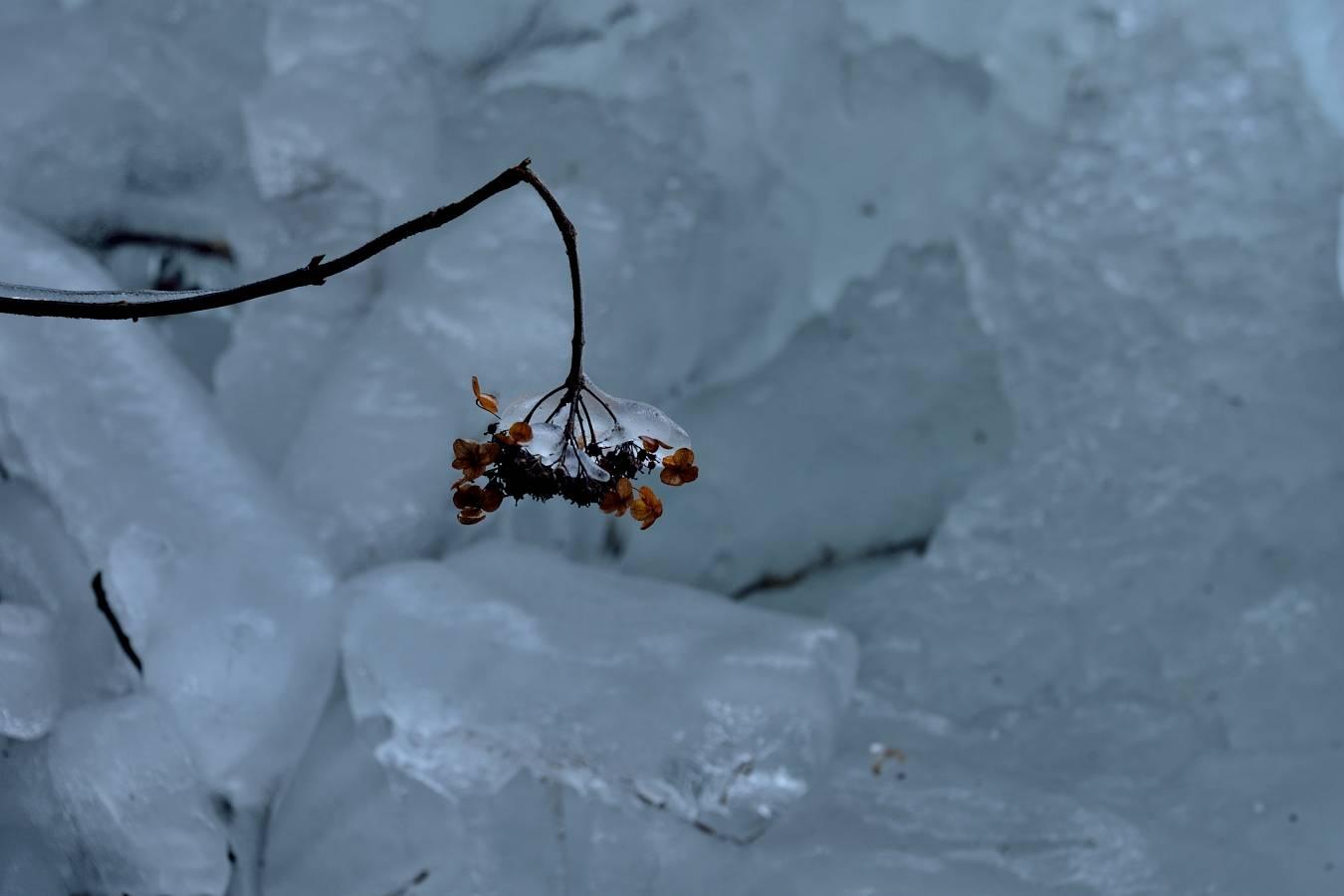滝の氷柱_b0223668_10582699.jpg