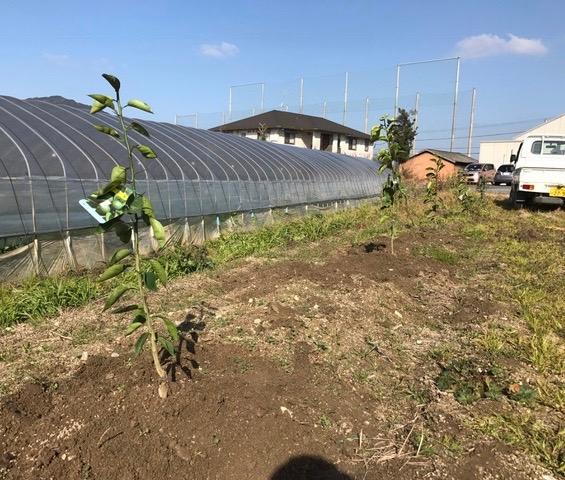 柑橘を植えました♪_f0232994_1531618.jpg