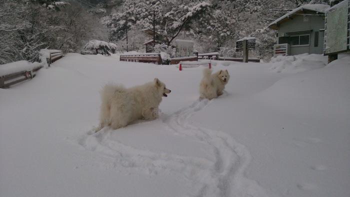 今日のお山散歩_a0049296_1853691.jpg