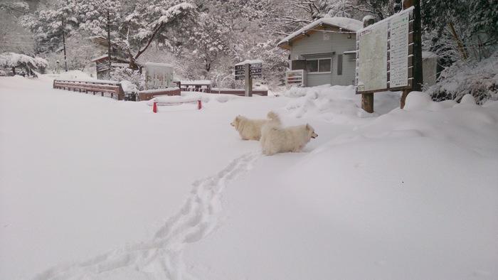 今日のお山散歩_a0049296_1855331.jpg