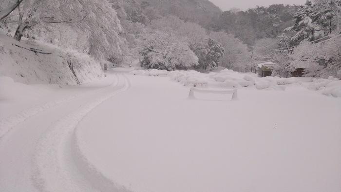 今日のお山散歩_a0049296_185990.jpg