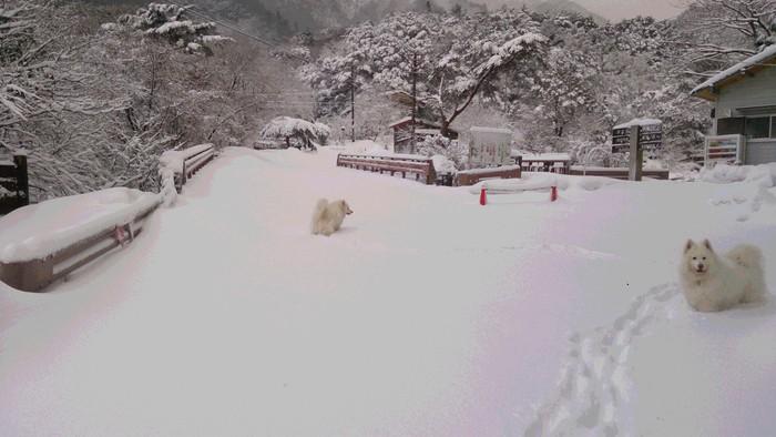 今日のお山散歩_a0049296_1862960.jpg