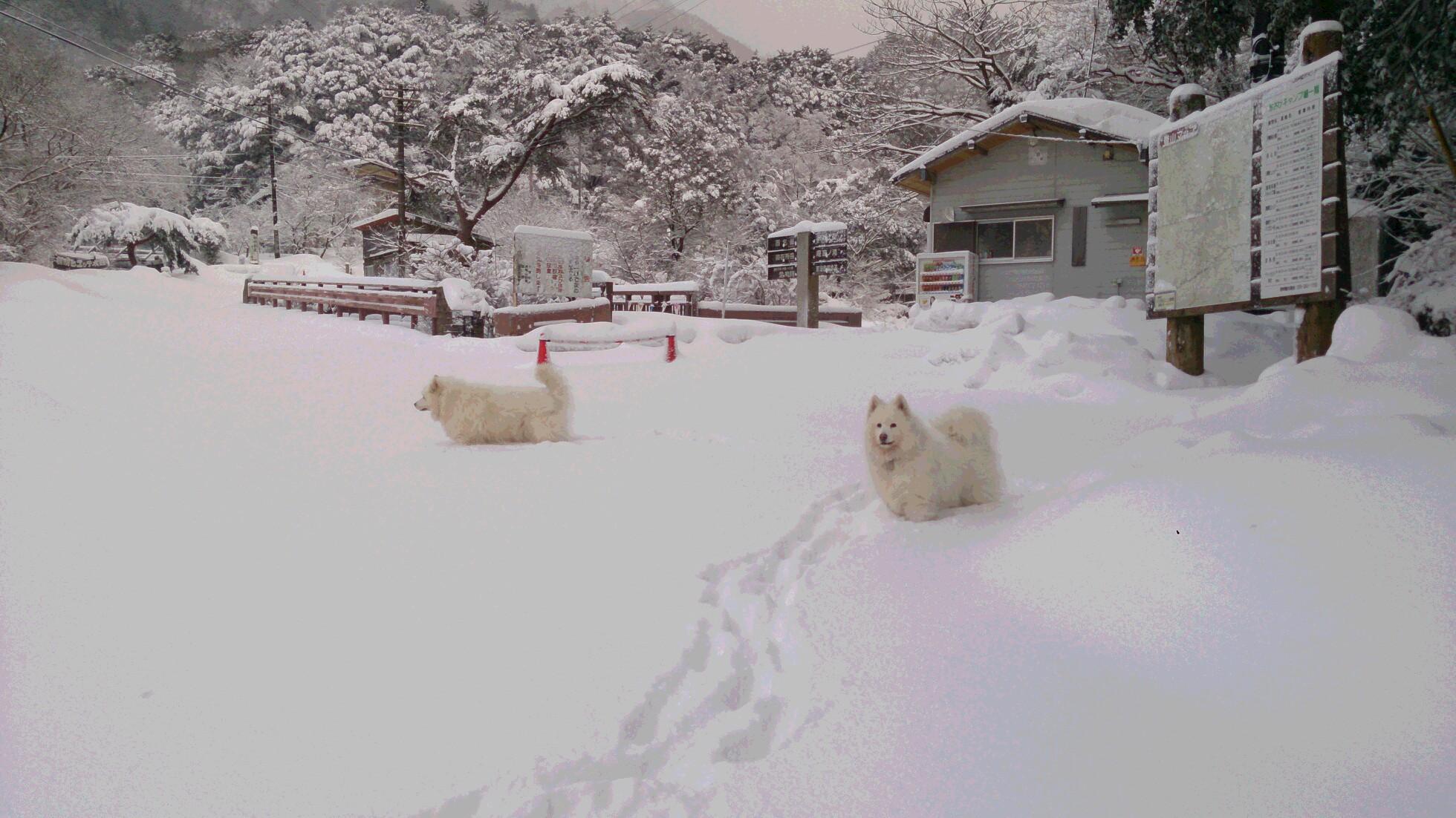 今日のお山散歩_a0049296_186999.jpg