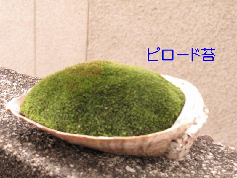 f0059498_2133836.jpg